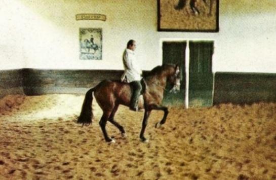 equitation_sentimentale_objectif_rassembler_2